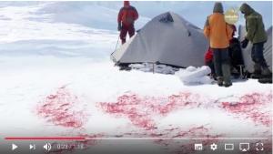 極地雪藻與極地血藻